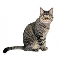 chov mačiek